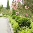 Pathway to garden — Stock Photo