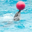 Performing dolphin with red ball — Stock Photo #30983171