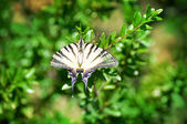 Butterfly on the green plants in park — Stock Photo