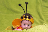 Honey Bee Baby on green background — Stock Photo