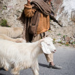 Himalayan shepherd leads his goat and sheep flock — Stock Photo #13243067