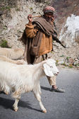 Himalayan shepherd leads his goat and sheep flock — Stock Photo