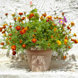 Garden flower pot with growing tagetes - Stock Photo