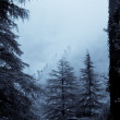 Forest in Mist — Stock Photo #14046380