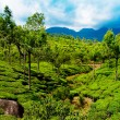 Tea plantation landscape. Munnar, Kerala, India — Stock Photo #22581259