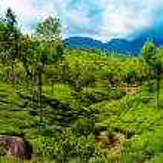 Tea plantation landscape. Munnar, Kerala, India — Stock Photo