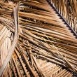 Grunge texture of dry palm tree leaf. Nature background — Stock Photo