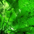 Jungle forest background. Plant leaves in tropical rainforest — Stock Photo
