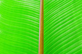 Green texture of banana leaf. Nature background — Stock Photo