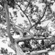Tree. Abstract silhouette of pine tree branches — Stock Photo