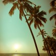 Beautiful sunset at tropical beach with palm trees — Stock Photo #27478839