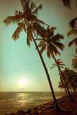 Beautiful sunset at tropical beach with palm trees — Stock Photo