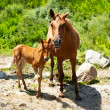Young foal and mare at meadow near mountains river — Stock Photo