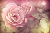 ロマンチックなピンクのバラの花を持つ水滴を抽象化します。 — ストック写真