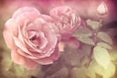 Abstract romantic pink roses flowers with water drops — Stock Photo
