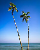 Beautiful tropical landscape with palm trees — Stock Photo