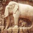 Stone bas relief fragment with elephant. India — Stock Photo