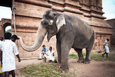 Elephant blessings pilgrims at Hindu Brihadeeswarar Temple. India — Stock Photo