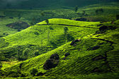 Tea plantation landscape. Munnar, Kerala, India — Stock Photo