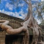 Ta Prohm temple at Angkor Wat complex, Siem Reap, Cambodia — Stock Photo #41706953