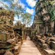 Ta Prohm temple at Angkor Wat complex, Siem Reap, Cambodia — Stock Photo #41706973