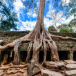 Ta Prohm temple at Angkor Wat complex, Siem Reap, Cambodia — Stock Photo #41706975