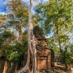 Ta Prohm temple at Angkor Wat complex, Siem Reap, Cambodia — Stock Photo #41706981