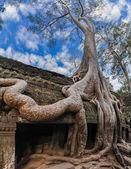 Ta Prohm temple at Angkor Wat complex, Siem Reap, Cambodia — Foto de Stock