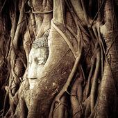 Buddha Head hidden in the tree roots. Wat Mahathat. Ayutthaya, Thailand — ストック写真