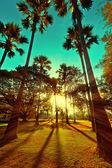 Güzel günbatımı güneş ışınlar, tropikal palmiye ağaçları ile park ile — Stok fotoğraf
