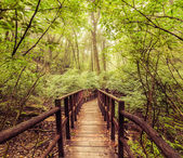 Jungle landscape in vintage style. Wooden bridge at tropics — Stock Photo
