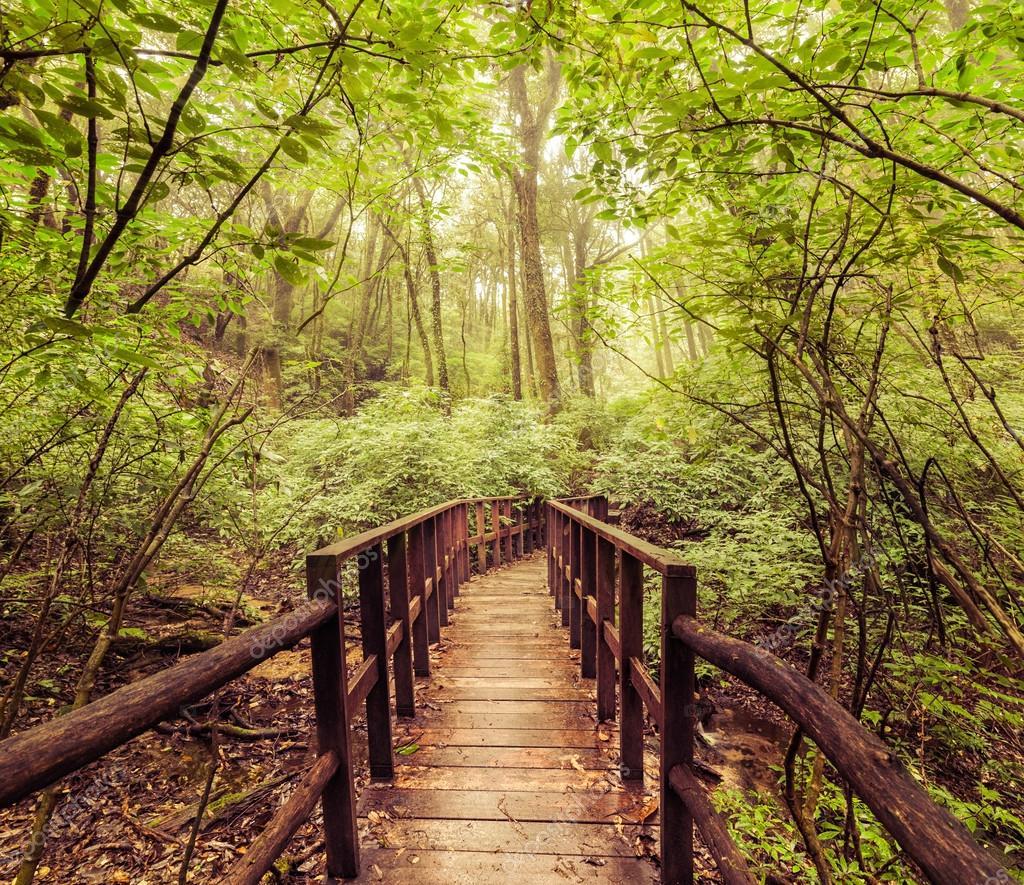 paysage de jungle dans le style vintage pont en bois de tropiques photographie perfect. Black Bedroom Furniture Sets. Home Design Ideas