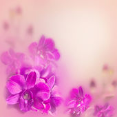 Abstract romantic floral background with pink tropical orchid — Stock Photo