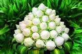 Bílý lotos květin v kytici — Stock fotografie