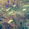 Abstract floral background in vintage style. Wild flowers at windy summer field — Stock Photo #43240593