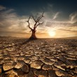 Global warming concept. Lonely dead tree at drought cracked desert landscape — Stock Photo #43240631