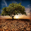Global warming concept. Lonely green tree at drought cracked desert landscape — Stock Photo #43639177
