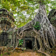 Ta Prohm temple with giant banyan tree at Angkor Wat complex, Siem Reap, Cambodia — Stock Photo #45899775