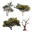 Tree collection. Four different trees isolated on white background — Stock Photo #45899919