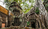 Ta Prohm temple with giant banyan tree at Angkor Wat complex, Siem Reap, Cambodia — Stock Photo