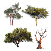 Tree collection. Four different trees isolated on white background — Stock Photo
