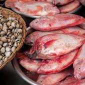 сырые свежие морепродукты, рыбу и моллюсков для продажи — Стоковое фото