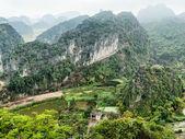 Vietnamese village among rice fields — Stok fotoğraf