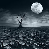 Lonely dead tree at full moon night — Stock Photo
