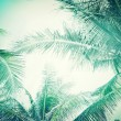 Abstract summer background with tropical palm tree — Stock Photo #49472289