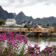 Wooden house at Lofoten archipelago — Stock Photo #18578093