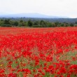 Poppies field — Stock Photo #29468209