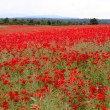 Poppies field — Stock Photo #29468239