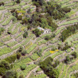 Stock Photo: Terraces