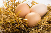 Eggs on a straw — ストック写真